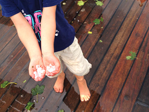 Sophie ist fasziniert von ihrem ersten richtigen Hagelschauer und sammelt fleissig Eiskörner