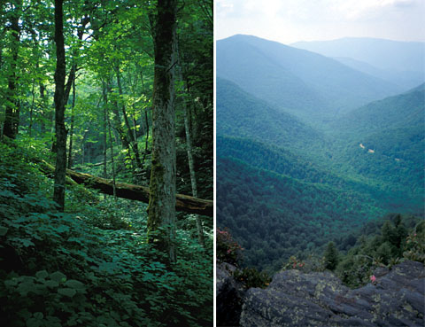Wandern in den Appalachen, Blue Ridge Mountains, Juni 1993