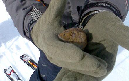 Die Oster-Maus mitten auf der Piste, 10. April 2009