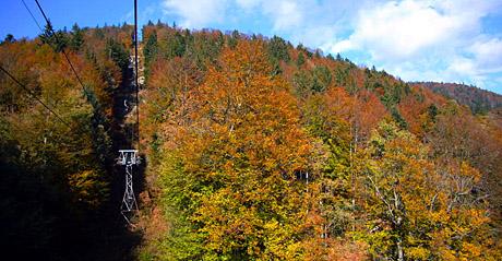 Goldener Herbst am Weissenstein, Ende Oktober 2009