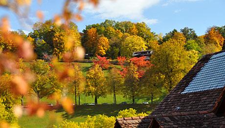 Goldener Herbst: Rosengarten, 27. Oktober 2009