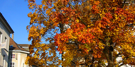 Goldener Herbst in Solothurn, Ende Oktober 2009
