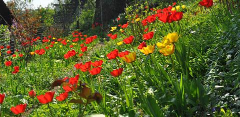 Im Garten, Karfreitag 2011