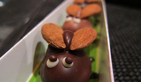 Schokoladen-Maikäfer: Jederzeit willkommen