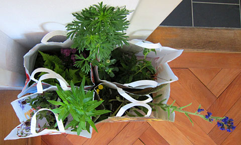 Die Ausbeute vom Wildpflanzenmärit Bern, 3. Mai 2011