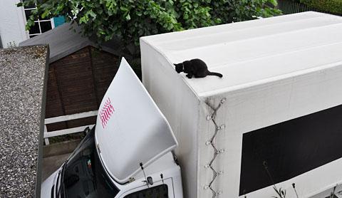 Sissi will vom Autodach, Juni 2011
