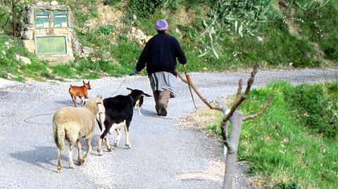 Spaziergang durchs Quartier mit den Haustieren
