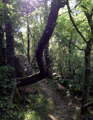 Eichenwald bei Seillans